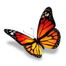 butterfly-پروانه (109)