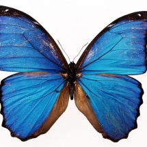 butterfly-پروانه (11)