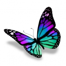 butterfly-پروانه (110)