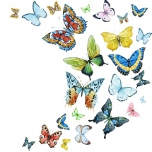 butterfly-پروانه (113)