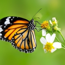 butterfly-پروانه (114)