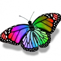 butterfly-پروانه (115)
