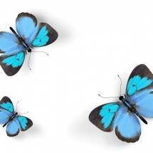 butterfly-پروانه (12)