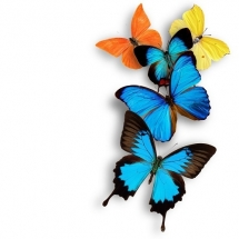 butterfly-پروانه (122)