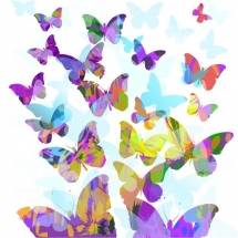 butterfly-پروانه (123)