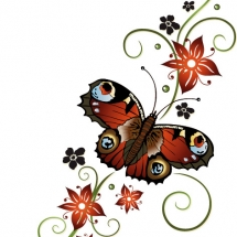 butterfly-پروانه (124)