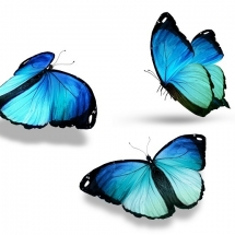 butterfly-پروانه (125)