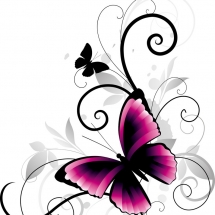butterfly-پروانه (127)