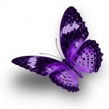 butterfly-پروانه (129)