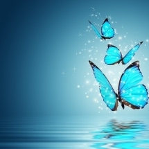 butterfly-پروانه (13)