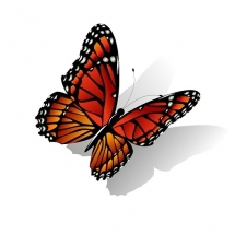 butterfly-پروانه (130)
