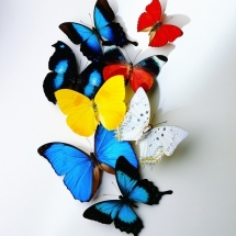 butterfly-پروانه (15)