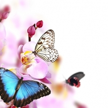 butterfly-پروانه (16)