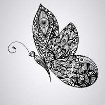 butterfly-پروانه (17)