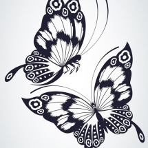 butterfly-پروانه (18)