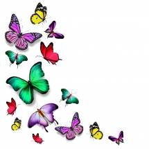 butterfly-پروانه (2)