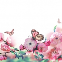 butterfly-پروانه (21)
