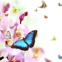 butterfly-پروانه (23)