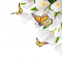 butterfly-پروانه (28)