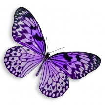 butterfly-پروانه (3)