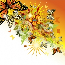butterfly-پروانه (30)