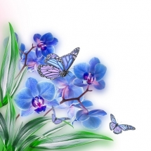 butterfly-پروانه (32)