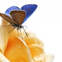 butterfly-پروانه (35)