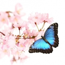 butterfly-پروانه (36)