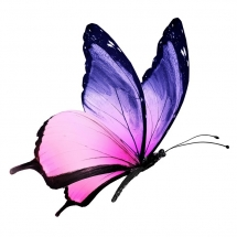 butterfly-پروانه (4)