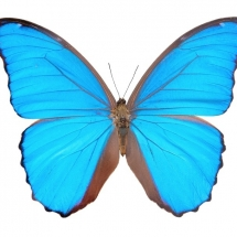 butterfly-پروانه (41)
