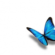 butterfly-پروانه (42)