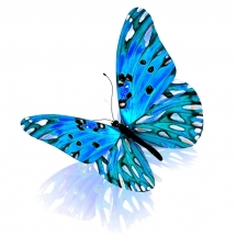 butterfly-پروانه (43)