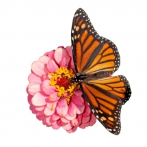 butterfly-پروانه (44)