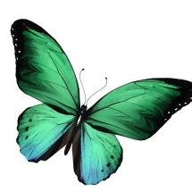 butterfly-پروانه (46)