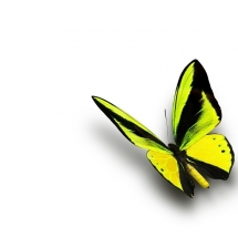 butterfly-پروانه (49)
