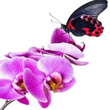butterfly-پروانه (5)
