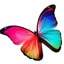 butterfly-پروانه (50)