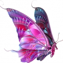 butterfly-پروانه (53)