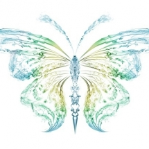 butterfly-پروانه (54)