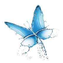 butterfly-پروانه (55)