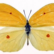butterfly-پروانه (56)