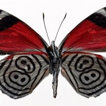 butterfly-پروانه (57)