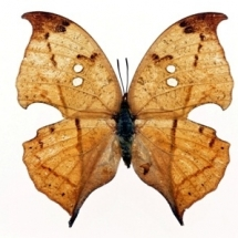 butterfly-پروانه (61)