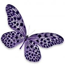 butterfly-پروانه (64)