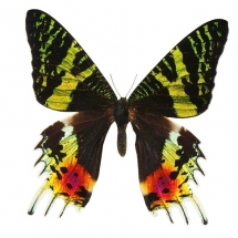 butterfly-پروانه (65)