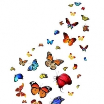 butterfly-پروانه (67)