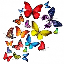 butterfly-پروانه (69)