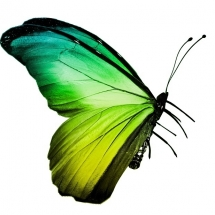 butterfly-پروانه (7)