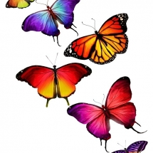 butterfly-پروانه (70)