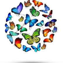 butterfly-پروانه (72)